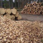 Holzlagerung nach Einschlag